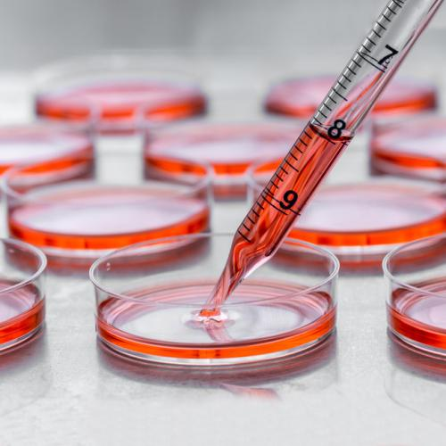 Picture of Cell culture